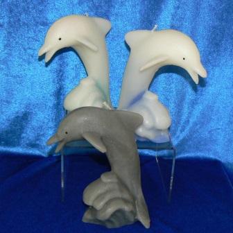 Delfin auf Welle